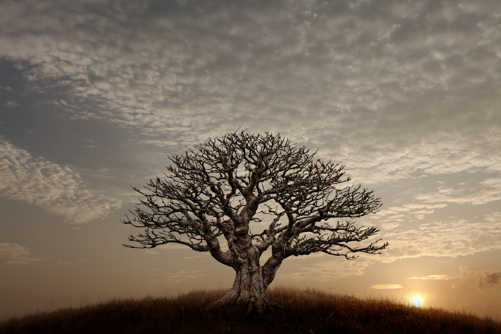 A Barren Tree